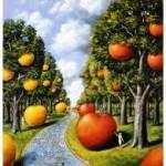 jablka olbinski