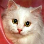 koty to takie istoty co lubia pieszczoty i psoty