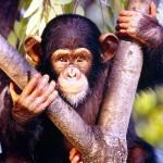 singe dans les arbres