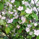 jolies-fleurs-visoflora-10026