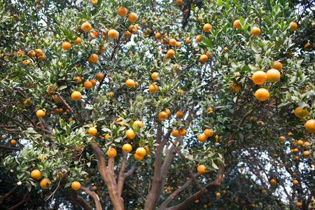 orangeraie-d-age-mur