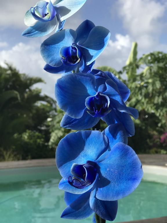 Belle orchidée bleue, belle orchidée blanche<br/> Tu n'as pas le glamour d'une pervenche,<br/> ni le parfum enivrant de la rose<br/> mais ta classe, ton élégance m'en imposent.