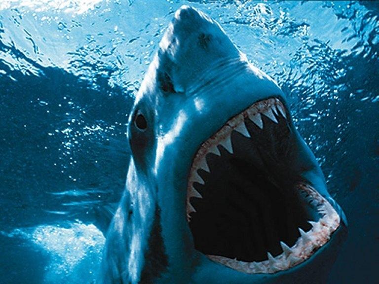 requin animal prédateur